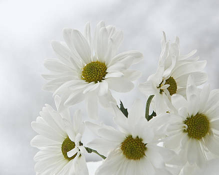 White on White Daisy's  by Katie Abrams