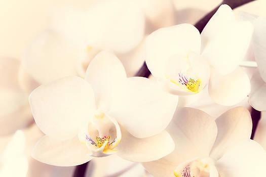 White orchid by Jelena Vasjunina