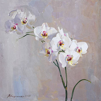 White orchid by Victoria Kharchenko
