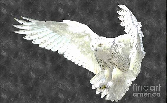 White Owl by Larry Stolle