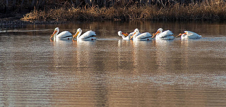 Eric Rundle - White Pelican Grooming