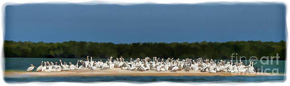 Dan Friend - White pelicans on sand island in Everglades
