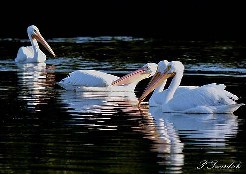 Patricia Twardzik - White Pelicans Posing