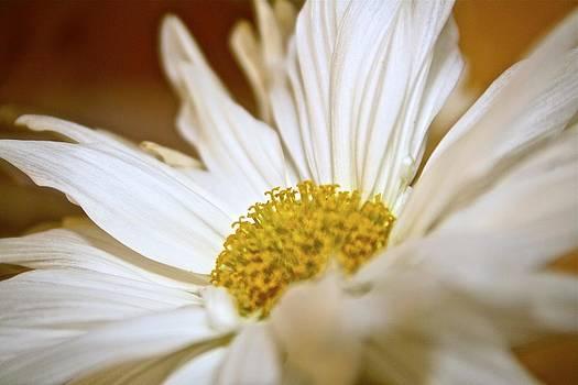 Jennifer Lamanca Kaufman - White Petals