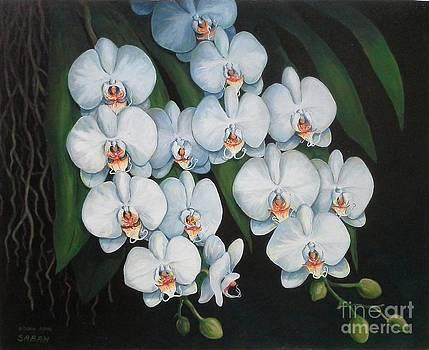 White Phaleanopsis Orchid by Edoen Kang