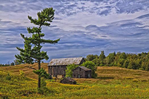 Gary Hall - White Pine and Old Barn