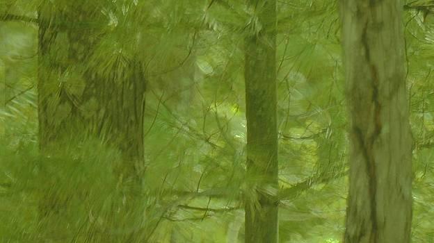 Rosemarie E Seppala - White Pines Kaleidoscope