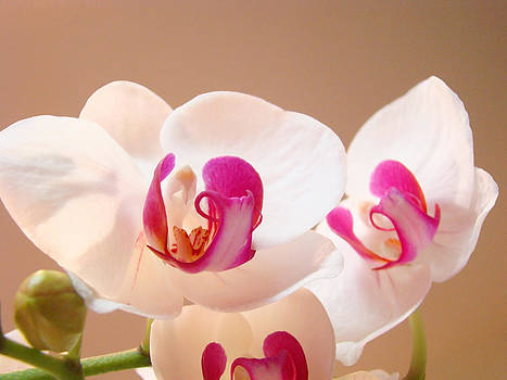 Baslee Troutman - White Pink Orchid Flowers Art Prints