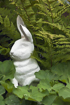 Sandra Foster - White Rabbit Among Lady