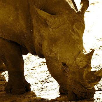 AnnaJo Vahle - White rhino in sepia