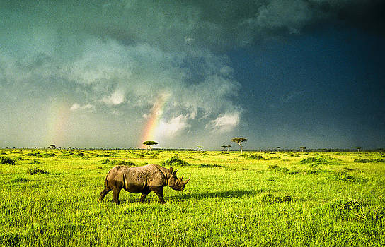 White Rhinoceros with Rainbows by Tina Manley