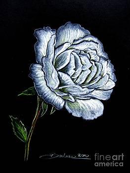 White Rose by Barbara Pelizzoli