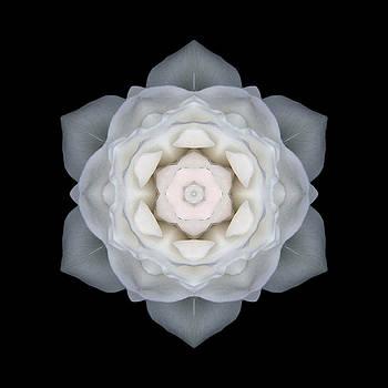 White Rose I Flower Mandala by David J Bookbinder