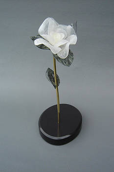White Rose by Leslie Dycke