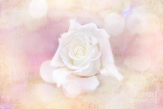 White Rose by Tamra Heathershaw-Hart