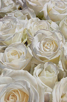 White Roses 130 x 194 cm by Thomas Darnell
