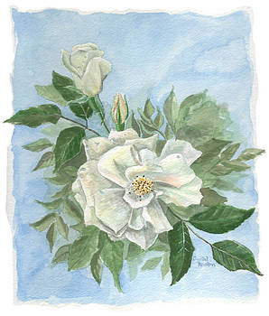 White Roses by Crystal Newton