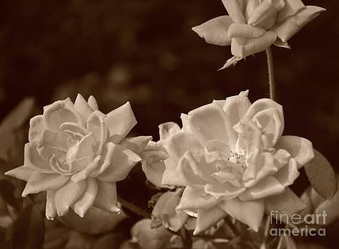 Bob Sample - White Roses On Beige