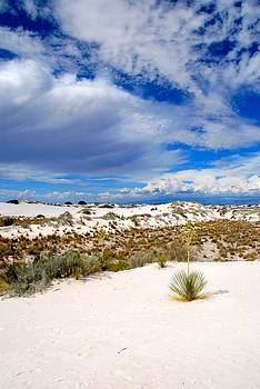 White Sands 2 by T C Brown