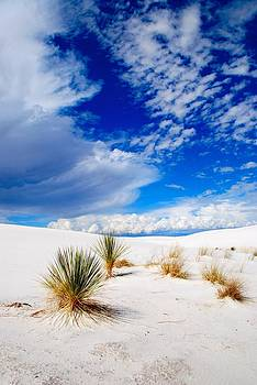 White Sands 4 by T C Brown