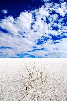 White Sands 6 by T C Brown