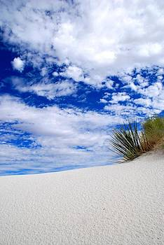White Sands 9 by T C Brown