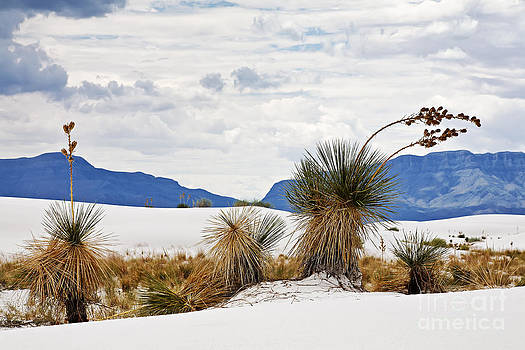 White Sands by Dee Johnson
