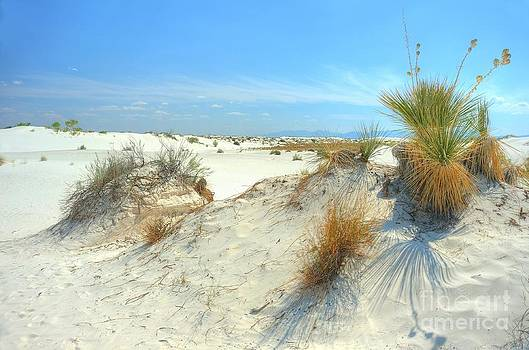 White Sands Foliage by John Kelly