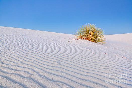 Katka Pruskova - White Sands