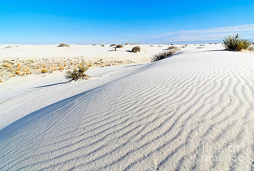 Jamie Pham - White Sands - Morning view White Sands National Monument in New Mexico.