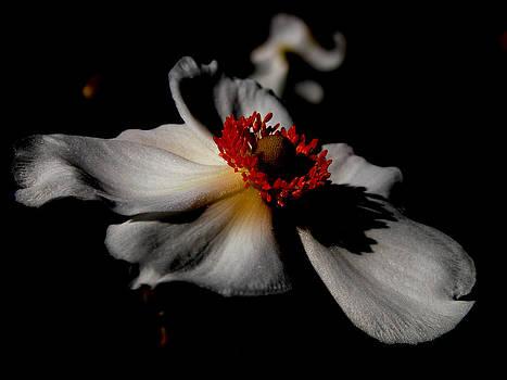 White Spring by Orphelia Aristal