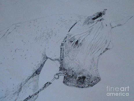 White Stallion by Patries Van Dokkum