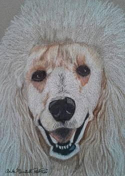 White Standard Poodle by Anita Putman