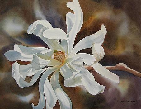 Sharon Freeman - White Star Magnolia Blossom