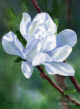 Sharon Freeman - White Star Magnolia Blossom with Background