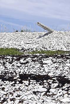 Arkady Kunysz - White stone beach