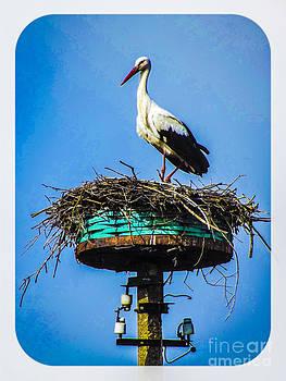 Algirdas Lukas - White Stork 5