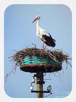 Algirdas Lukas - White Stork