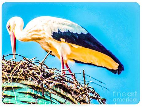 Algirdas Lukas - White Stork in his own nest.