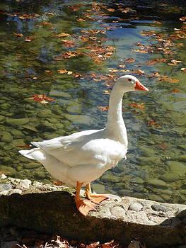 Sannel Larson - White Swan