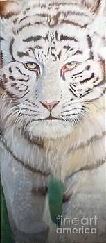 White Tiger by Ira Florou