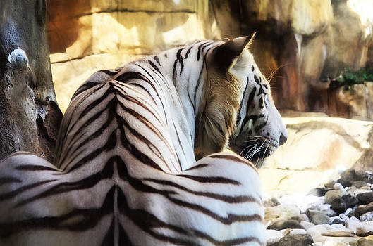 White Tiger by Nate Heldman