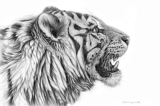 White tiger - Pantera tigris tigris by Svetlana Ledneva-Schukina