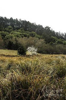 White Tree by Tim Tolok