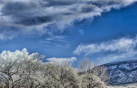 Brian King - White Trees