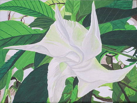 White Trumpet Opening by Hilda and Jose Garrancho