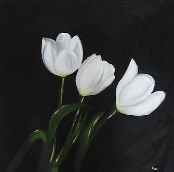 White tulips on Black by Maureen Hargrove