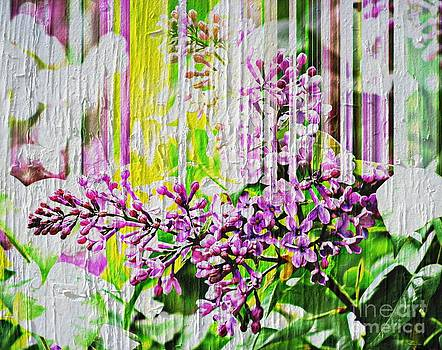 White Washed Painted Lilac by Judy Palkimas