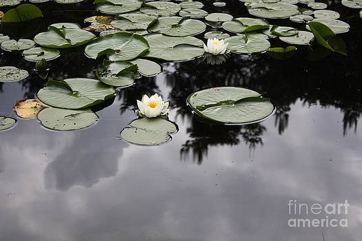 Danielle Groenen - White Waterlilies