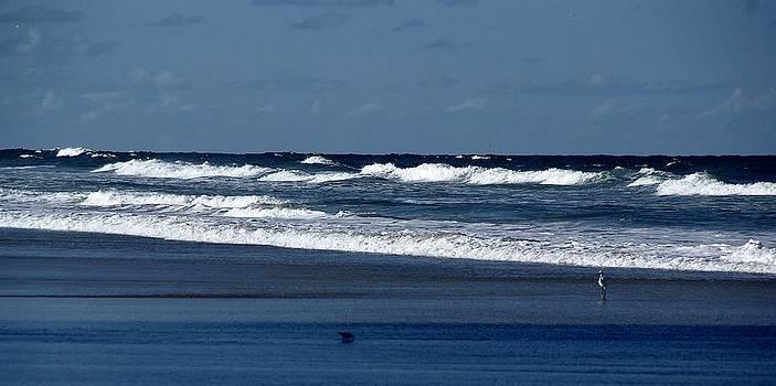 Patricia Twardzik - White Wave Walking